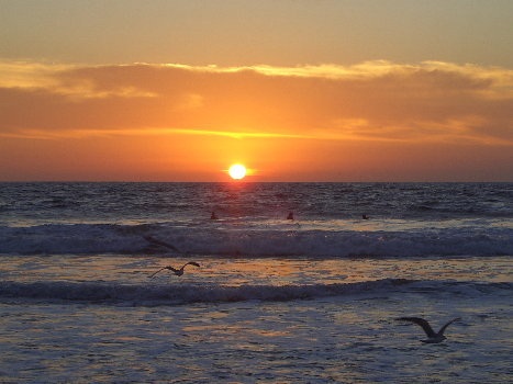 birds, surfers and sunset