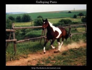 Galloping_Pinto_by_furikakeru